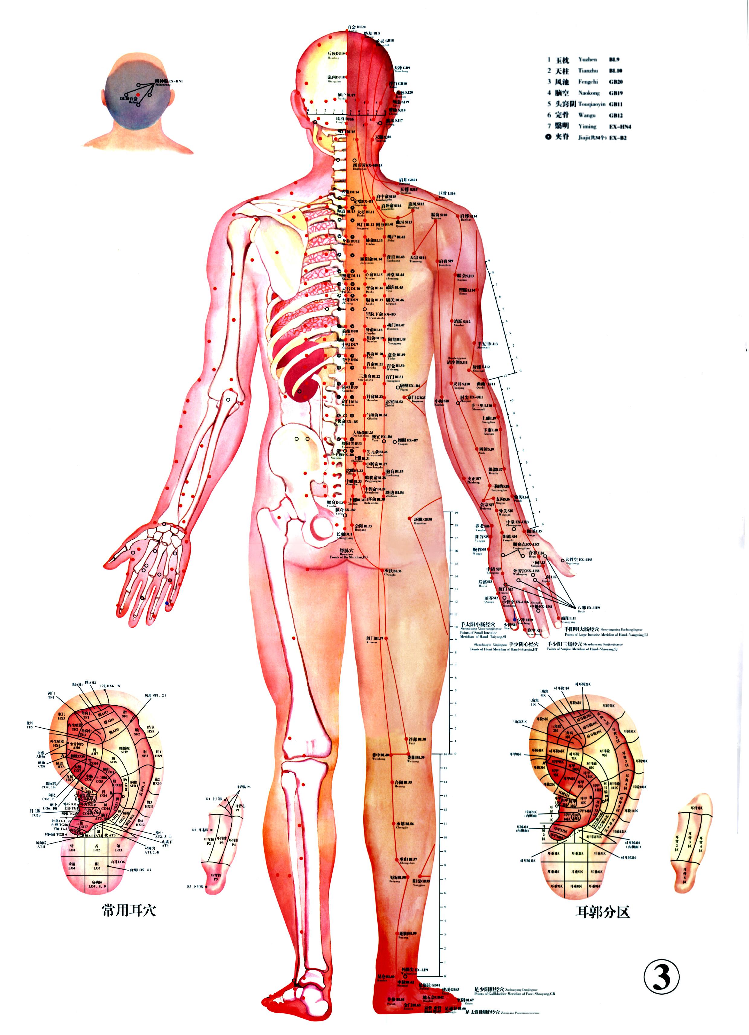 Схема меридианов тела человека